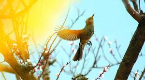 P表紙:鳥2